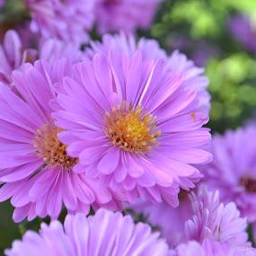 Beauty of nature. by Jean Bogdan Dumitru - Flowers Flower Buds