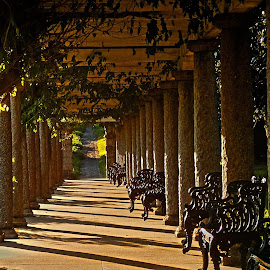 Walkway by Andy Vic Lindblom - Buildings & Architecture Other Exteriors ( benches, vines, sunset, columns, path, virginia, shadows, pillars )