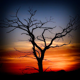 sunset tree by Costin Mugurel - Nature Up Close Trees & Bushes ( mountain, tree, nature, silhouette, sunset )
