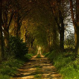 der Weg by Leni Leja - Landscapes Forests