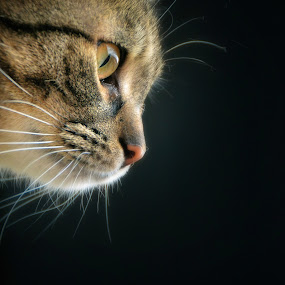 cat by Almasa Dalan - Animals - Cats Portraits