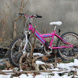 Pink Bike by Leah Zisserson - Transportation Bicycles ( building, winter, pink, abandoned, bicycle,  )