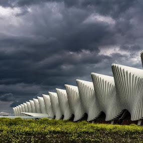 Station by Ivan Bertusi - Buildings & Architecture Public & Historical ( station, train, reggio, calatrava )