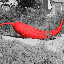 Chilli by Ruth Courts - Artistic Objects Other Objects ( sculpture, red, selective, pepper, chilli, selective color, pwc )