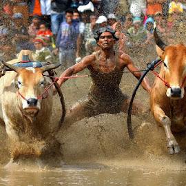 Menatap Lurus ke Depan... by Hendra Nasri - Sports & Fitness Rodeo/Bull Riding