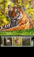 Screenshot of Animal Sounds & Ringtones