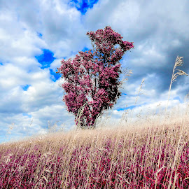 One weekend by Aaron Walker - Landscapes Prairies, Meadows & Fields ( photowall, photoshop art, colourful, photomatix, color image, meadow, trees, splashed, photooftheday )