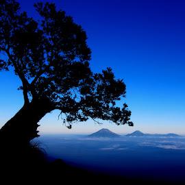 siluet tree by Hudz Arts - Landscapes Mountains & Hills