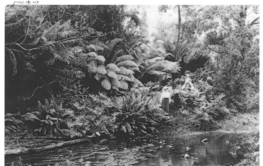 The waterhole where Lucy died, near the Campbell family home. Courtesy of the Campbell family photographic collection