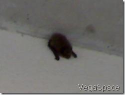 Vega1106