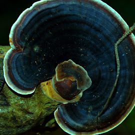 Wood Mushroom  by Karthick Reddy - Nature Up Close Mushrooms & Fungi ( mushroom, wood, wood mushroom,  )