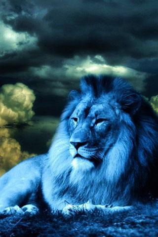 3d Lion Wallpapers Free Download 3d Lion Wallpaper No 1 Wallpaper