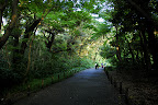 Long tree covered path in Shizen Kyoikuen