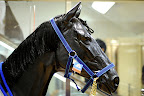 There is now a horse in Odakyu Halc department store