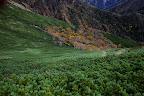 Foliage in the alpine region of Akadake