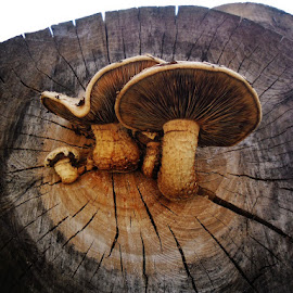 Born in a wood storage.Incredible! by Giovanna Pagliai - Nature Up Close Mushrooms & Fungi ( humidity, trunks, rain, storage )