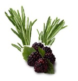 blackberry rosemary