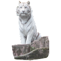 White Tiger Sitting Sticker icon
