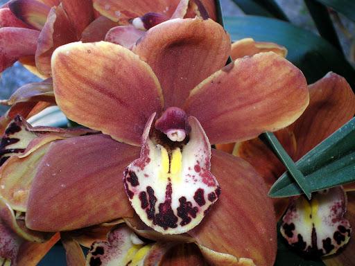 Flores, Orquídeas