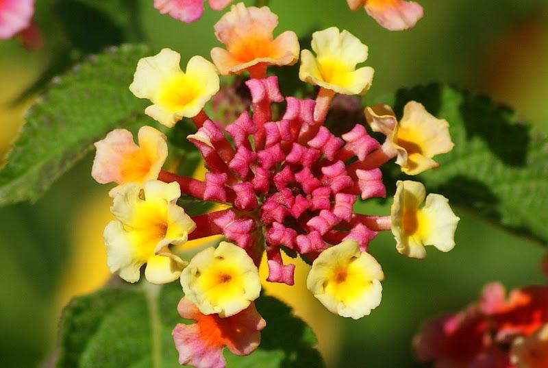 Flores com cores