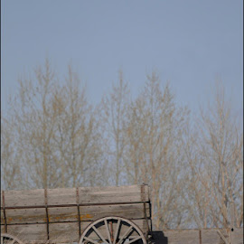 Old wagon by Janet Gilmour-Baker - Artistic Objects Other Objects ( field, back in the day, carridge, saskatchewan, farmers field, wagon, abandoned )