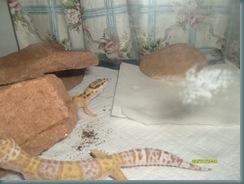 Gecko no2