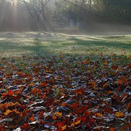 autumn by David Solodar - City,  Street & Park  City Parks ( red, nature, park, autumn, forest, dog )