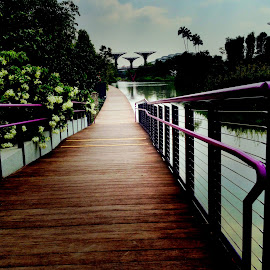 Boardwalk by Janette Ho - Instagram & Mobile iPhone (  )
