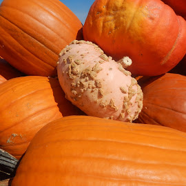 One Out of Many by Heather Nelen - Nature Up Close Gardens & Produce ( fall, october, harvest, halloween )