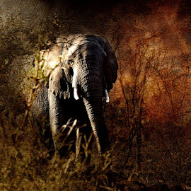 Limpopo by Bjørn Borge-Lunde - Digital Art Animals ( wild animal, nature, elephant, wildlife, africa )