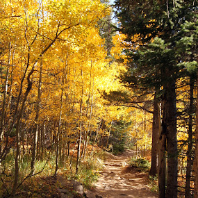 Wild Basin Trail by Jason Kiefer - Landscapes Travel ( fall, rocky mountain national park )