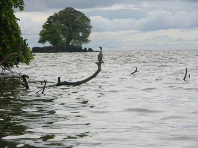 Bird and island.jpg
