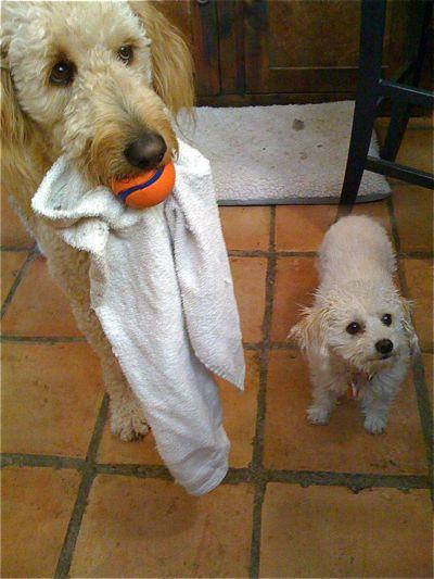 Rosetta-ball&towel-Pumpkin.jpg
