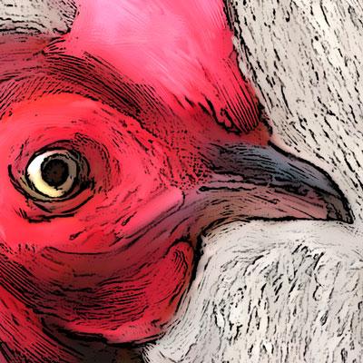 beach-rooster-400px-detail2.jpg