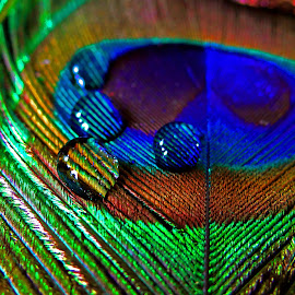 water droplet on feather by Asif Bora - Artistic Objects Other Objects