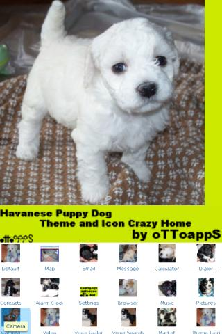 【免費個人化App】Puppy Dog Theme Crazy Home-APP點子