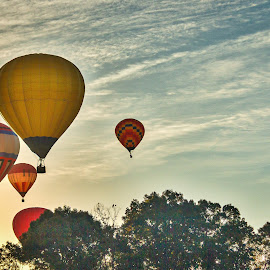 Balloon Fest by Lou Plummer - News & Events US Events ( iredell county, hot air balloon, sky, balloon fest, trees )