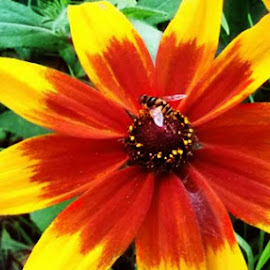 Beauty of Mother Nature by Flirtalicious FeistY - Nature Up Close Gardens & Produce ( nesting, bee, yellow, garden, flower )