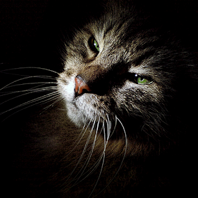 Why no... by Jurijs Ratanins - Instagram & Mobile Other ( wishkers, mobilography, cat, animals, eyes )