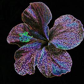 digital hibiscus by Asif Bora - Digital Art Things