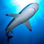 Shark Aquarium HD icon