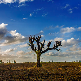Dramatic Sky by Bhumik Shah - Landscapes Cloud Formations ( oldphoto, tree, nature, dramatic, landscape )