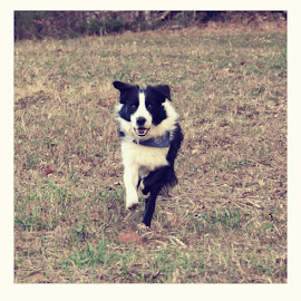 Jake by Whitney Bowley - Animals - Dogs Running