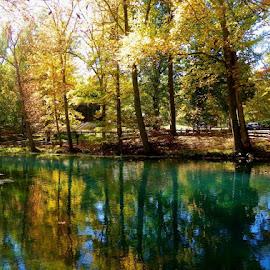 Meramec State Park, Missouri by Lynnie Keathley - Landscapes Forests