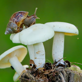 by Simon Yue - Nature Up Close Mushrooms & Fungi