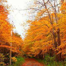Fall of 2013 ..... soon be time for a new 'Fall Pic' ... by Charlotte MD McLellan - Novices Only Landscapes