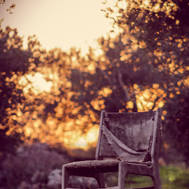 Chair by Tarik Talat - Artistic Objects Furniture ( chair, nature, bokeh, spring, flower )