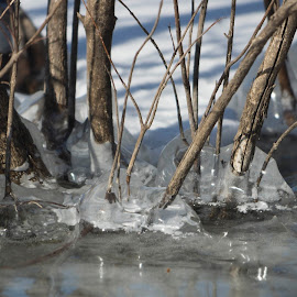 by Greg Bennett - Nature Up Close Water ( illinois )