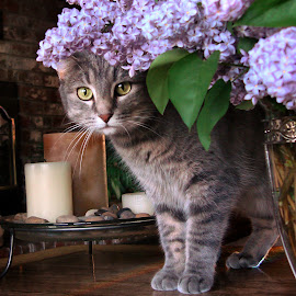 Missy in the Lilacs by Jackie Stoner - Animals - Cats Portraits ( cat, purple, peek-a-boo, grey, flowers, lilacs )