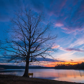 Lake James Tree by Tom Moors - Landscapes Sunsets & Sunrises ( tree, lake james, silhouette, sunset, lake )